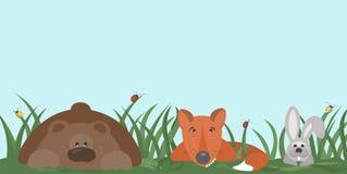 De bosbewoners dragen, vos, hazen die in het gras verbergen, rond kijkend met nieuwsgierigheid Stock Foto's