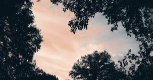 De bosbomen silhouetteren en de groene bladeren van de de lentezomer bij zonsonderganghemel met wolken en de stralen die van de z stock video