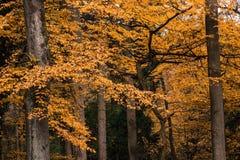 De bosbomen van de herfst achtergronden van het aard de groene houten zonlicht Stock Afbeeldingen