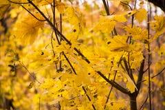 De bosbomen van de herfst achtergronden van het aard de groene houten zonlicht Stock Foto's