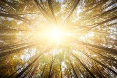 De bosbomen van de herfst achtergronden van het aard de groene houten zonlicht Royalty-vrije Stock Afbeelding