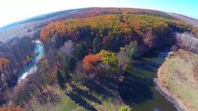 De bosbomen van de herfst achtergronden van het aard de groene houten zonlicht stock video
