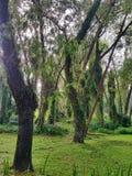 De bosbomen van de herfst achtergronden van het aard de groene houten zonlicht De Achtergronden van de aard Royalty-vrije Stock Afbeeldingen