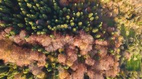 De bosbomen van de hoogste mening stock afbeeldingen
