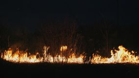 De bosbrand bij nacht, sluit opbrandende struiken, droog gras stock videobeelden
