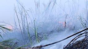 De bosbrandstruiken branden, is de lucht verontreinigd met rook Brand, close-up stock videobeelden