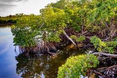 De bosjes ontmoeten watermanier Stock Afbeeldingen