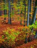 De boskleuren van de daling stock foto