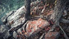 De boskleuren van de vloerherfst naast een gletsjermeer banff Stock Afbeeldingen