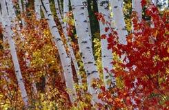 De Bosmening van de herfst royalty-vrije stock afbeeldingen
