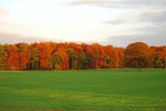 De bosrand van de herfst Stock Afbeelding