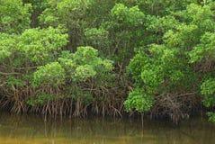 De BosRand van de mangrove stock fotografie