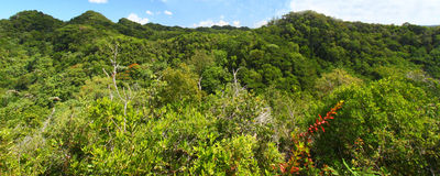 De BosReserve van Guajataca - Puerto Rico stock foto