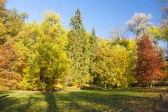 De bosscène van de herfst Een meer in een vreedzaam hout Royalty-vrije Stock Afbeeldingen