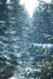 De bosscène van de winter Royalty-vrije Stock Foto's