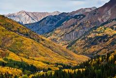 De Bossen van de esp boven Ouray, Colorado Stock Afbeelding