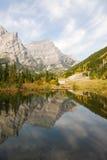 De bossen van de herfst in vallei stock afbeeldingen