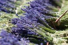 De bossen van de lavendel Stock Foto