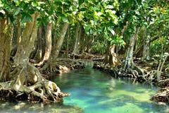 De bossen van de mangrove stock foto's