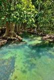 De bossen van de mangrove royalty-vrije stock foto