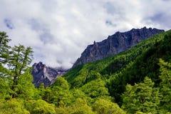 De bossen van de pijnboomboom bij de basis van Jade Dragon Snow Mountain stock foto
