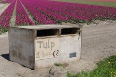 De bossen van tulpen voor verkoop langs de toeristische tulp leiden in Noordoostpolder, Nederland Royalty-vrije Stock Fotografie