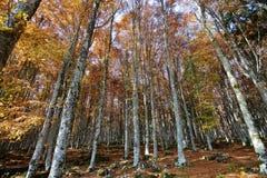 de bossen zijn gekleurd met de herfst stock foto