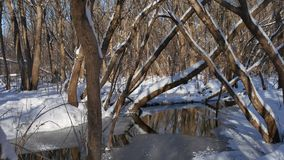De bosstromen van de landschapsstroom in de sneeuw van de de winter bosaard stock video