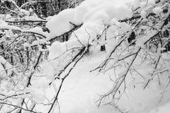 De bostakken van het de winterlandschap met oranje volkomen bevroren die bladeren omhoog met sneeuw worden behandeld Stock Foto