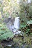 De boswaterval van de regenwoudcalifornische sequoia Royalty-vrije Stock Fotografie