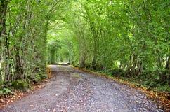 De bosweg Stock Afbeelding