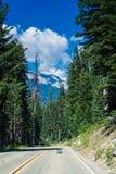 De bosweg Royalty-vrije Stock Fotografie