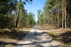 De bosweg in het midden van een bosopheldering weg het blauw royalty-vrije stock afbeeldingen