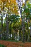 De bosweg van de herfst Stock Foto's