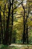 De bosweg van de herfst Royalty-vrije Stock Fotografie