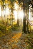 De bosweg van de herfst Royalty-vrije Stock Afbeeldingen