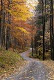 De bosweg van de herfst stock foto