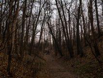 De bosweg van de herfst Foto die in Polen wordt gemaakt Stock Foto