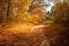 De bosweg van de herfst Foto die in Polen wordt gemaakt Stock Fotografie