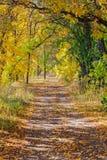De bosweg van de herfst Foto die in Polen wordt gemaakt royalty-vrije stock foto's