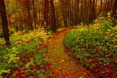 De bosweg van de krommeherfst in park stock afbeeldingen