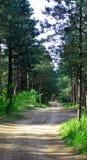 De bosweg van de pijnboom royalty-vrije stock afbeelding