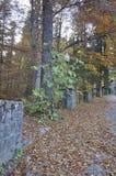 De bosweg van de herfst Foto die in Polen wordt gemaakt royalty-vrije stock afbeeldingen