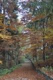 De bosweg van de herfst Foto die in Polen wordt gemaakt stock afbeelding