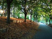 De bosweg van de herfst Foto die in Polen wordt gemaakt Bruin, sterke drank Royalty-vrije Stock Afbeelding