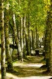 De bosweg van het paradijs stock afbeelding