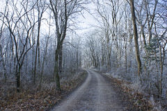 De boswinter december van de wegvorst Royalty-vrije Stock Fotografie