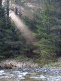 De boszonsopgang van de berg Stock Foto's