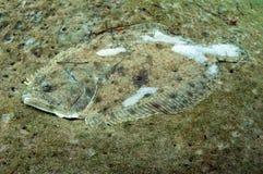 De bot van Camoflage onderwater royalty-vrije stock foto's