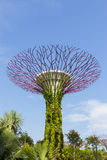 De Botanische boom van tuin door de baai Stock Foto